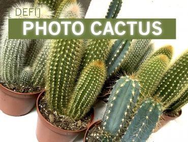 Concours photo cactus